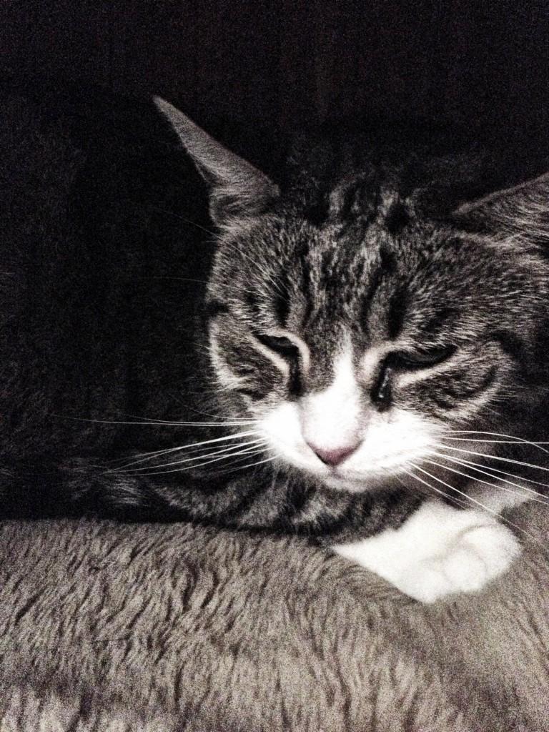 Cats, Miaouuuu img_0304